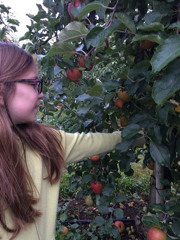 Apple Picking Liv